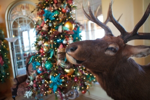 Peacock Christmas, Christmas Tree, Christmas Decorations, Show Me Decorating