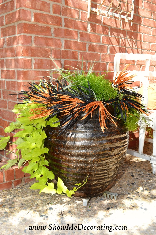 Black and orange pops against the lime green potato vine